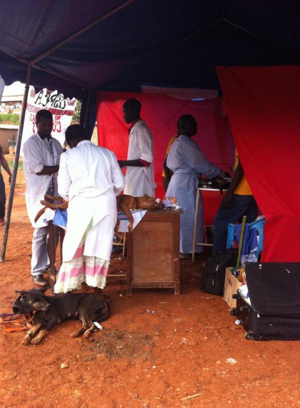 Spay/Neuter/Vaccination Community Clinic in Slums of Kampala